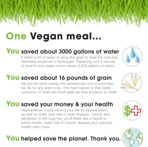 One Vegan Meal